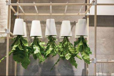 Jardin Interior Ideas Para Decorar Los Ambientes Con Plantas La - Decoracion-plantas