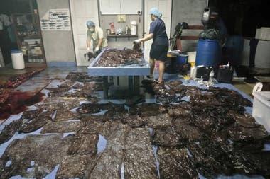 En el país del sudeste asiático cada año mueren cientos de animales con contaminación