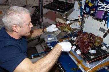 El astronauta Steve Swanson cultivando lechugas rojas a bordo de la Estacin Espacial Internacional en junio de 2014