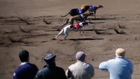 Se aprobó la ley que prohíbe la carrera de perros de todas las razas en todo el territorio argentino