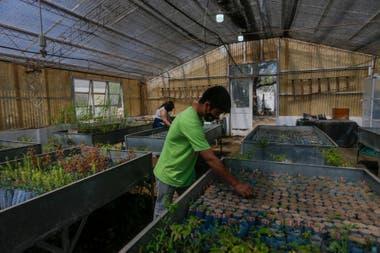 En el vivero de la Facultad de Ciencias Agropecuarias de la Universidad Nacional de Córdoba, a cargo de Jacqueline Joseau, se preparan plantines de especies nativas que serán plantadas en las zonas afectadas por los incendios