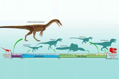 Era un depredador extremadamente ágil, pues el fémur fosilizado presenta estructuras de inserción muscular bastante desarrolladas