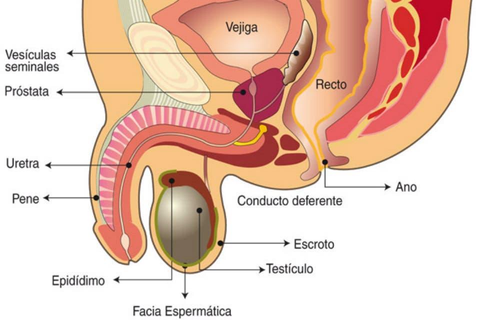vs hipertrofia benigna leche de próstata