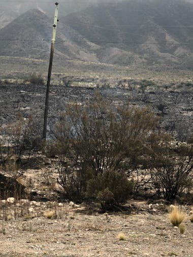 """El incendio en la localidad montañosa de Potrerillos fue controlado y quedó en """"guardia de cenizas"""". Más de 70 viviendas fueron alcanzadas por las llamas."""