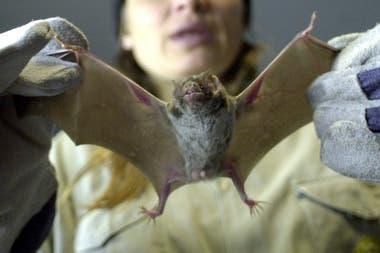 Según el Daily Mail, los mercados que venden carne de murciélago, perros y gatos volvieron a abrir a pesar de la pandemia de coronavirus