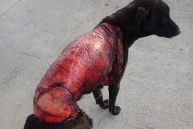 Los veterinarios creen que pudo no tratarse de un acto de maltrato animal, sino de un impacto contra un vehículo