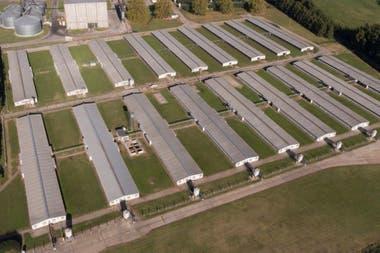 El criadero de Cabaña Argentina en Roque Pérez, donde se realiza todo el circuito productivo