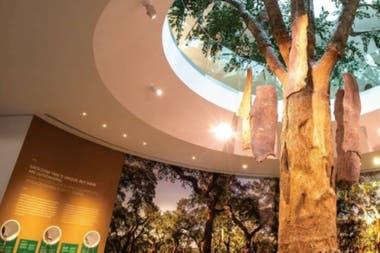 El corcho, del árbol a la botella y otros usos en un museo sobre esta producción típica portuguesa