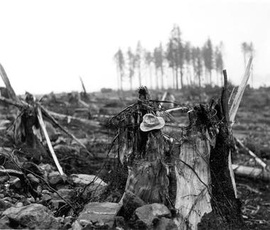 Este árbol estaba a 11 kilómetros de donde se originó el megatsunami (Don Miller/USGS)