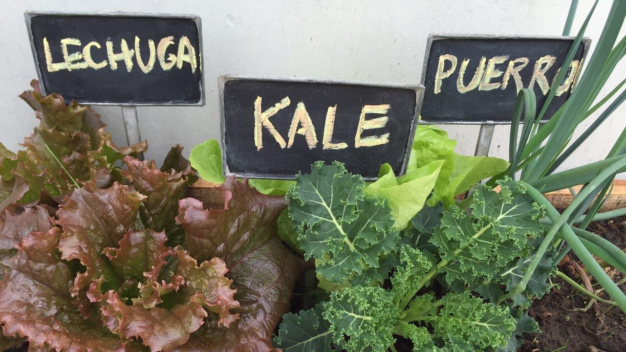 Vegetales Caseros Qu Necesit S Para Armar Una Huerta En Tu Casa  ~ Como Hacer Una Huerta Ecologica