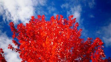 El rojo es el hermano mayor de los colores.
