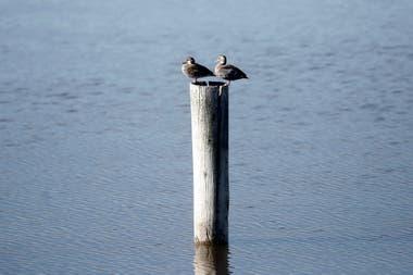 La reserva alberga más de ciento veinte especies de aves como macaes, gallaretas, garzas, cuervillos de cañada, cisnes de cuello negro, patos, gaviotas, siete colores de laguna, entre otros