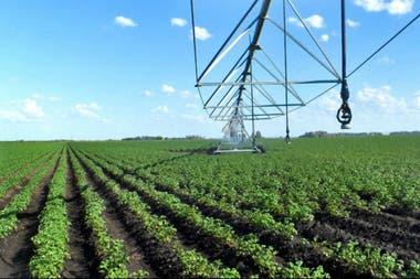La producción del cultivo a nivel nacional ronda los 2,43 millones de toneladas