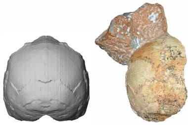 El cráneo 1 de Apidima con parte de sedimento adherido, supuestamente de un Homo sapiens que vivió hace 210.000 años, el más antiguo de Europa