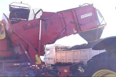 En Balcarce, cosecha de papa directo al camión que llevará a las distintas ciudades del país