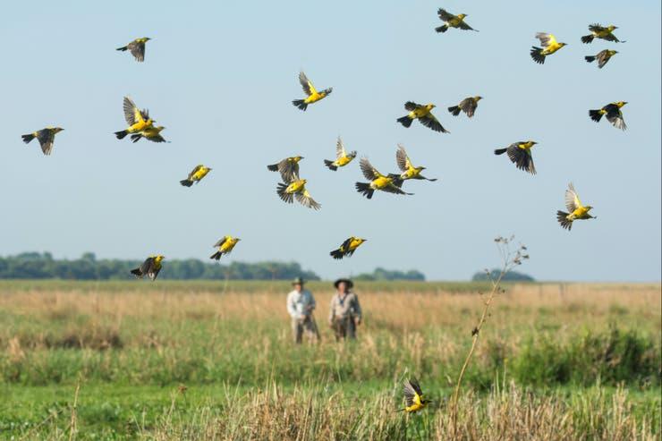 La bandada, en pleno vuelo en el Parque Iberá