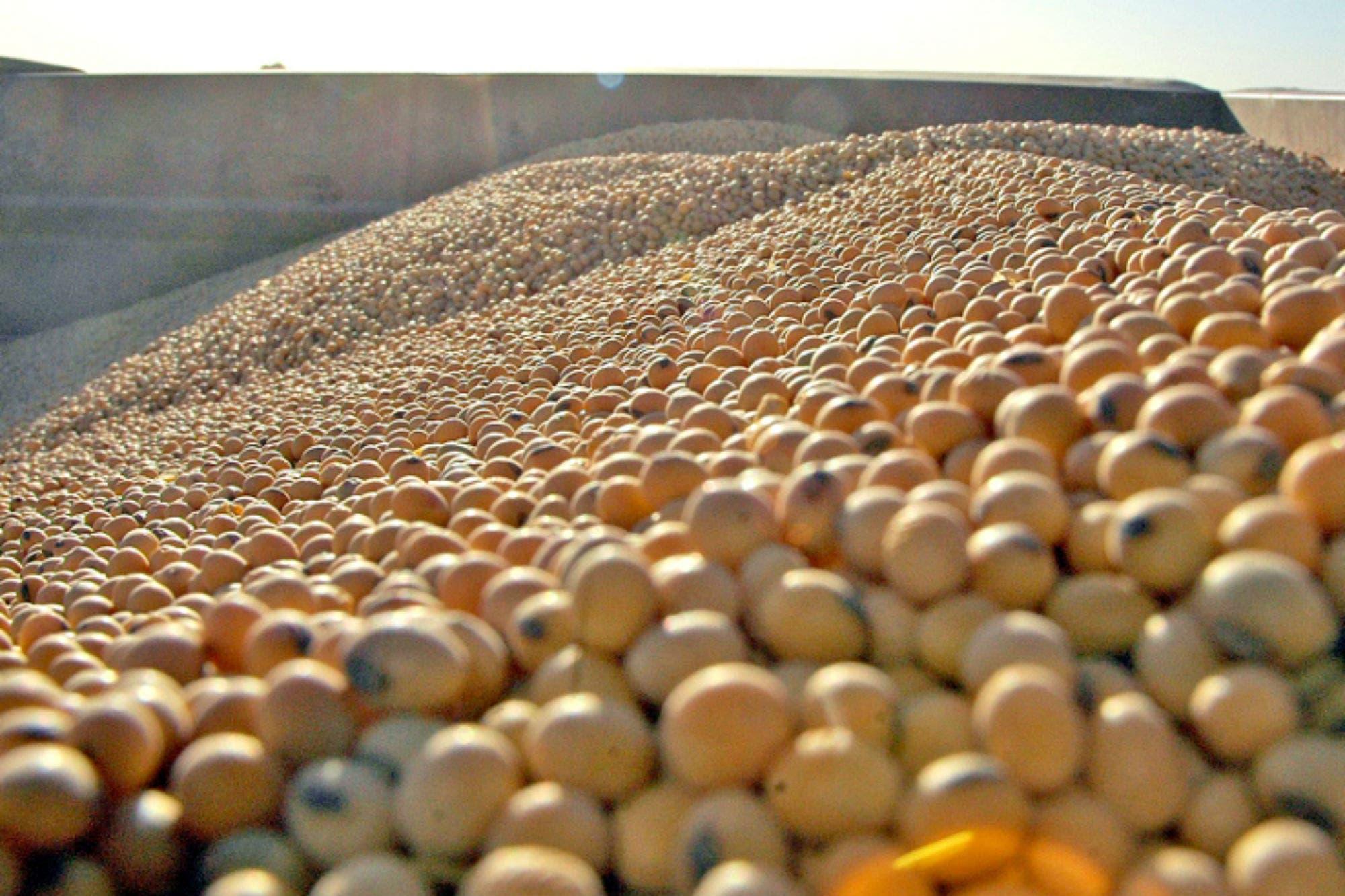 Entre la incertidumbre local y la debilidad externa, bajó el precio de la soja argentina