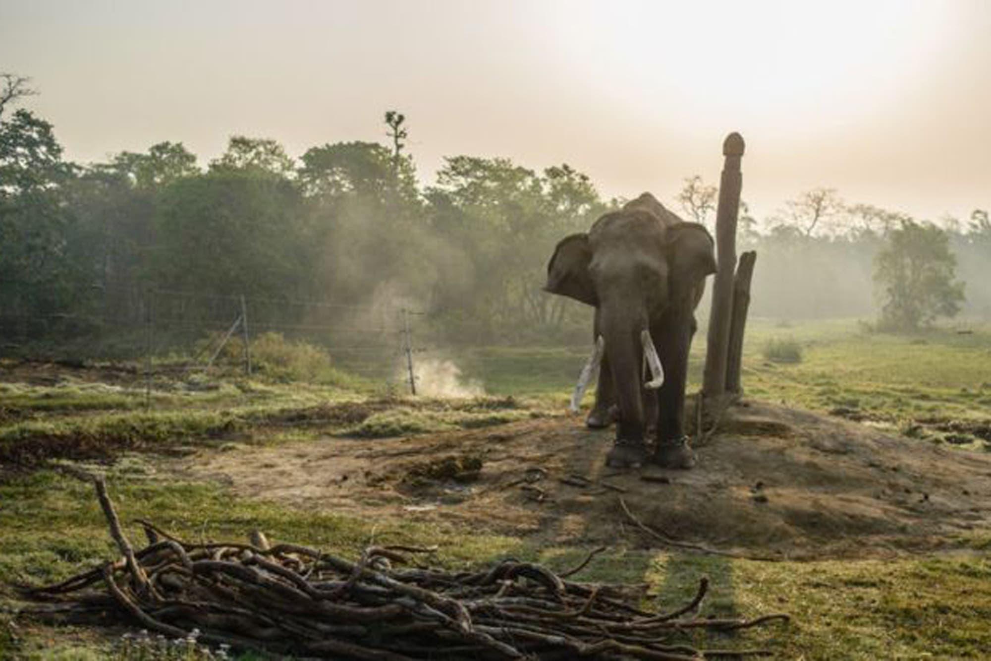 Sudáfrica: un cazador furtivo murió aplastado por un elefante y acabó devorado por leones