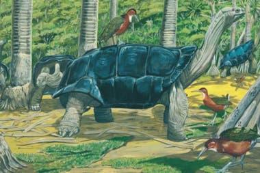 Esta pintura del paleontólogo Julian Hume, del Museo de Historia Natural de Londres, ilustra a los rálidos que evolucionaron en el atolón de Aldabra