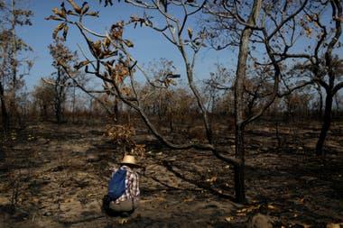 Así quedó gran parte de la selva arrasada por el fuego