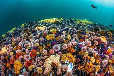 """Cuarto premio: """"Biodiversidad"""" tomada en Simons Town, Sudáfrica por Greg Lecouer"""
