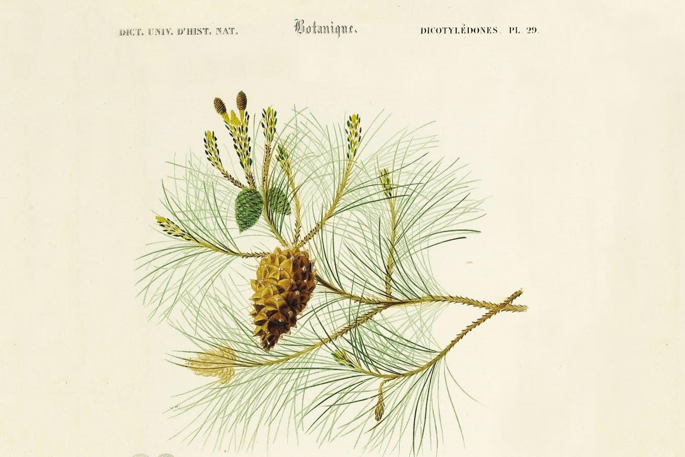El reino vegetal comprende unas 350.000 especies, que se clasifican por su morfología, es decir, las características de sus frutos, flores, hojas, raíces y tallos.