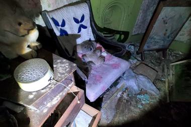 Un osito y un conejo de peluche sobre los muebles de la supuesta antigua dueña