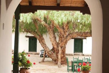 El molle del patio de la Hacienda de Molinos: brinda sombra y es protagonista de un espacio muy grato para los huéspedes.