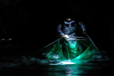 Esta foto tomada el 25 de diciembre de 2020 muestra a un pescador local revisando sus redes mientras pesca anguilas bebé por la noche a lo largo de una playa en el condado de Yilan en el noreste de Taiwán