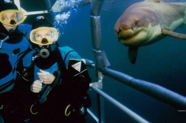 """Los Benchley durante un buceo en 2005, con un tiburón que """"sonríe"""" para la cámara"""