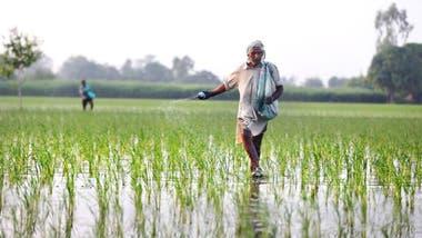 En India, el aumento de áreas verdes se debe sobre todo al incremento de la agricultura