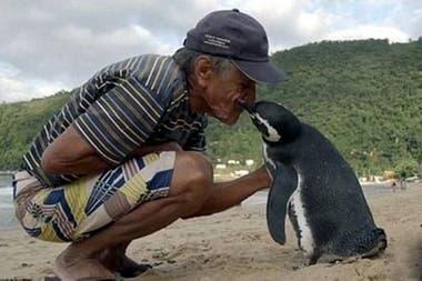 Din Din, un pingüino que reconoce a quien lo salvó y se lo agradece todos los años
