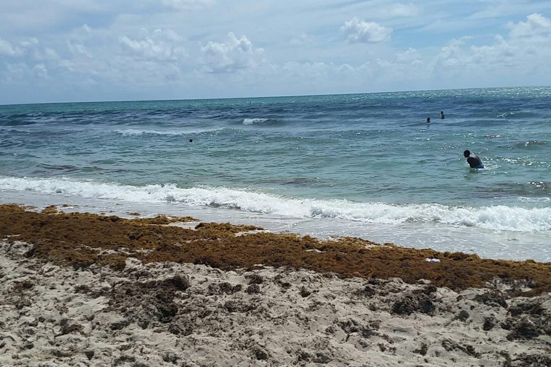 Adiós al agua cristalina: las algas invaden las playas del sur de Florida