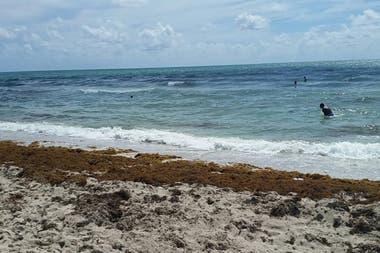 Florida, atestada por una especia de alga llamada zargaso