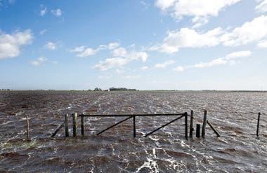 """""""Nunca vi una sequía como la de este año. Y después vino el temporal que impidió recolectar lo poquito que quedaba"""""""