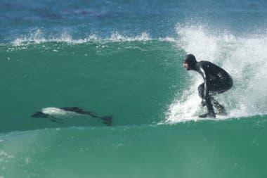 Los hermanos surfearon con toninas overas