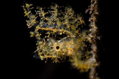 """Tercer puesto: """"Pequeños camarones peludos"""" tomada en Tulamben, Bali, Indonesia por Paolo Isgro"""