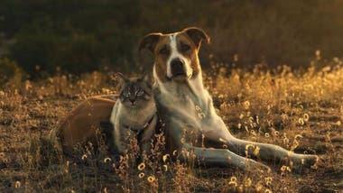 El perro y el gato son modelos perfectos para las fotografías de Cynthia.