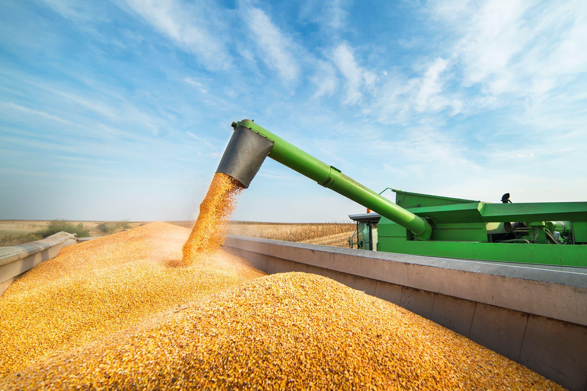 Por qué son claves las exportaciones del agro para que se recupere la economía
