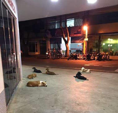 Los seis perros esperaron impacientes la salida Luiz en la puerta del hospital durante toda la noche.