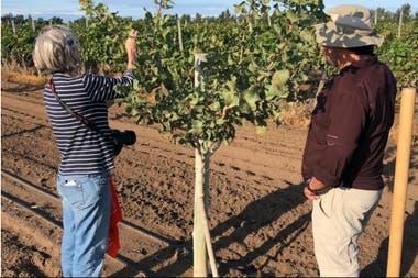 Facundo Balboni junto a la americana experta en pistachos Louise Ferguson observando las plantas