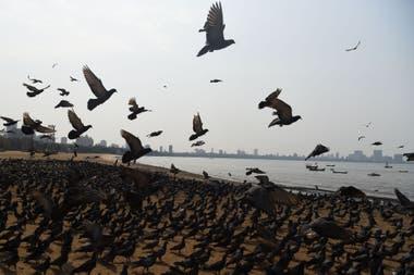 El confinamiento humano permite el retorno de la naturaleza a algunas ciudades