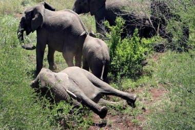 Botsuana cuenta con una población aproximada de 130.000 elefantes y una buena reputación en cuanto a tareas de conservación
