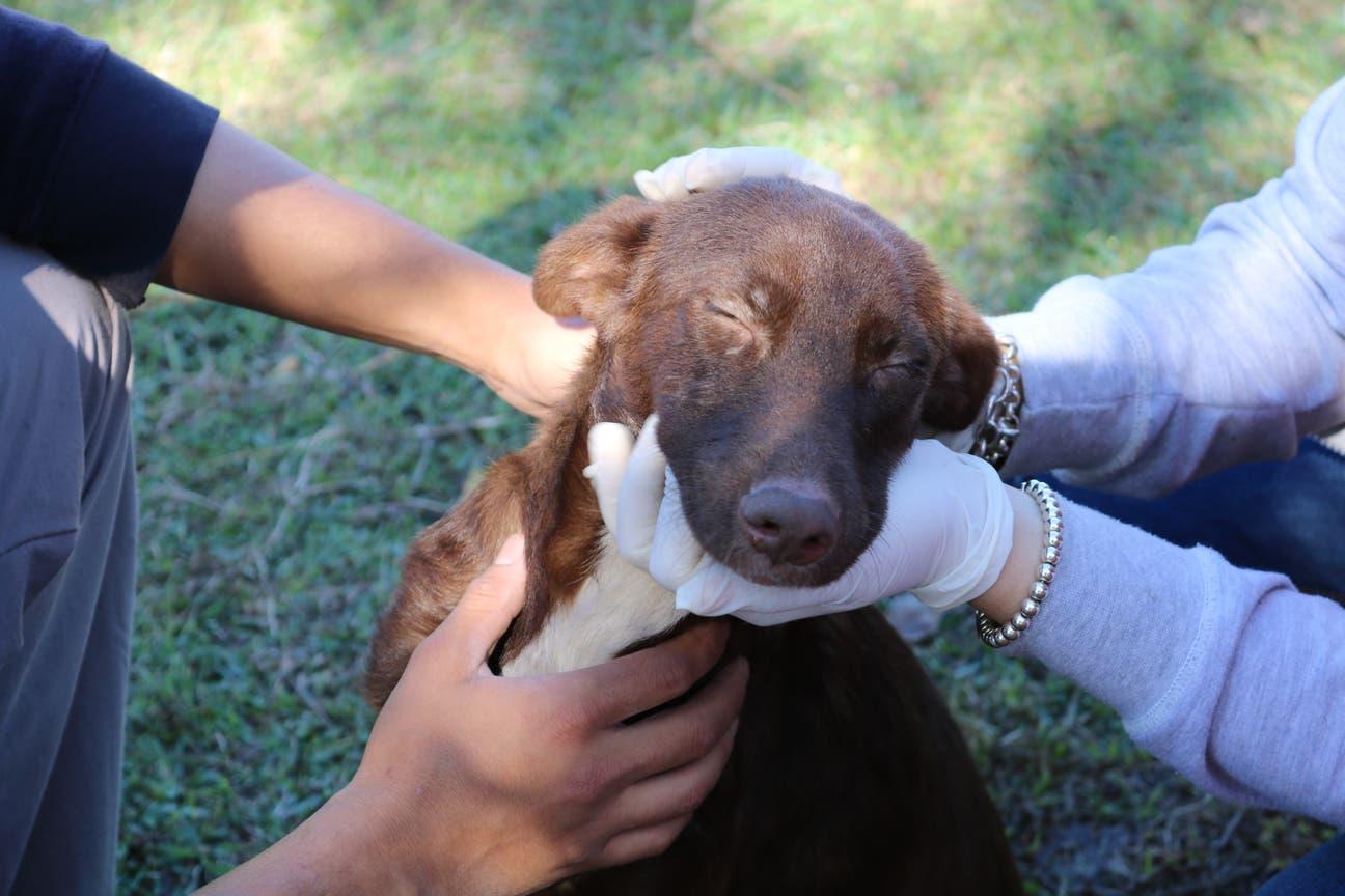 A través del contacto con los perros, los chicos no solo aprenden a cuidarlos sino que logran mejorar su autoestima