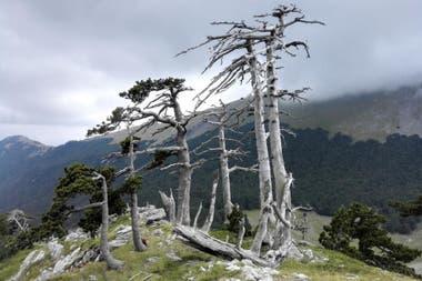 En uno de los puntos más altos de uno de los más famosos parques de Italia, se encuentra Italus.
