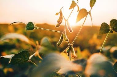 Genética, prácticas y entender el ambiente, claves para achicar brechas