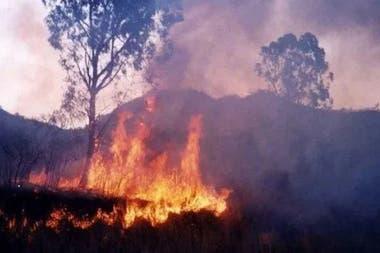 Por los incendios forestales, se prevé un crecimiento en el tránsito de fauna autóctona