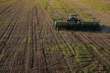 En la Argentina se sembraron en 2018 unos 16 cultivos con una superficie superior a Alemania o Japón