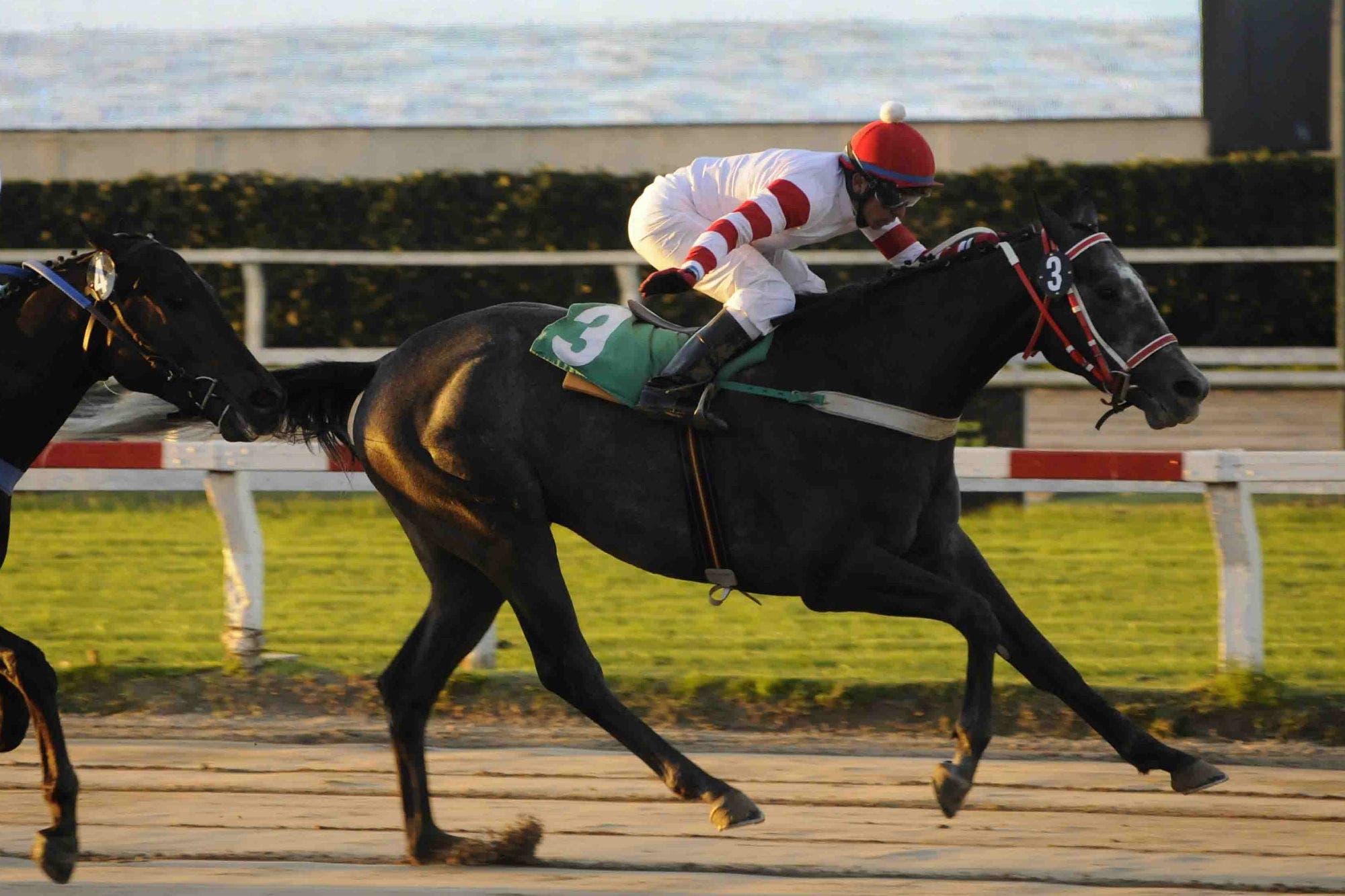 Turf: Cuándo comienza la Triple Corona y cuáles son los caballos que estarán en las gateras en Palermo