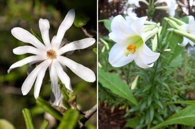 10 Flores De Primavera Con Perfumes Maravillosos Para Tener En El